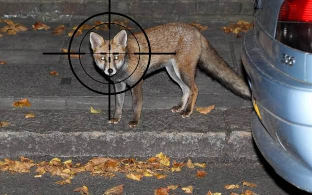 Londoners hire snipers to kill foxes in their gardens