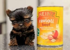 uk smallest dog